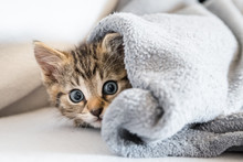 Kleines Kätzchen Unter Einer Decke