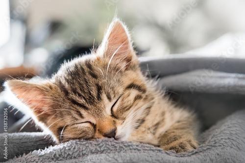 mały Kot śpi