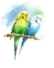 Watercolor Pet Birds Green And...