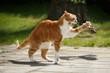 Leinwandbild Motiv Katze fängt Vogel