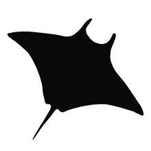 Vector Stingray Silhouette, Ray Fish Illustration. Animal In The Wild - Hand Drawn Sketch, Marine Life Swimming Animal
