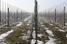 Orchard Winter Season