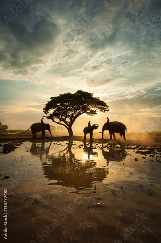 The elephants walking under a big tree in silhouette , Thailand
