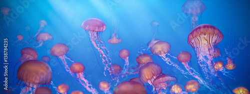 school of jellyfish illustration, Sea Nettle Canvas-taulu