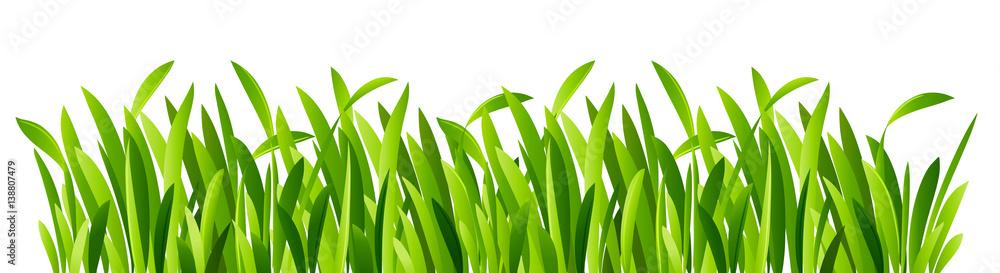 Fototapety, obrazy: Green grass closeup
