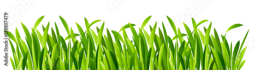 Zielona trawa zbliżenie