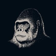 Gorilla Portrait Face