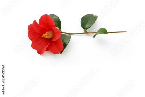 Carta da parati Rote Kamelienblüte