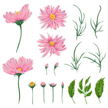 Pink Chamomile Flowers, Leaves And Buds Set. Rustic Floral Design Elements For Wedding Invitations And Birthday Cards. Vintage Vector Illustration In Watercolor Style.