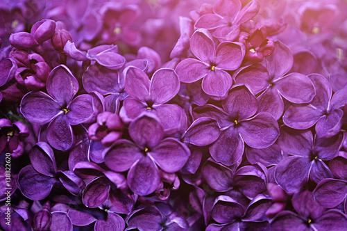 Foto op Aluminium Snoeien Lilac flowers, spring floral background