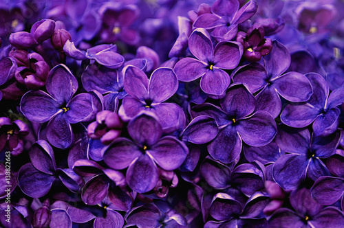 Lilac flowers, spring floral background