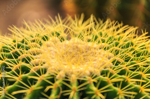 Cactus In The Gardent