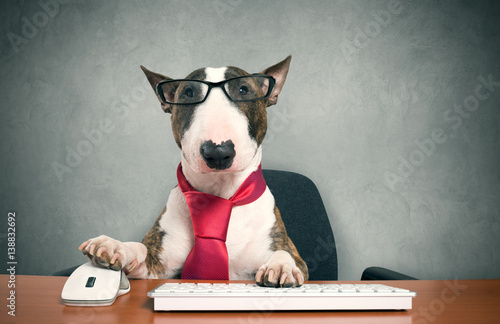 Fotomural Business dog