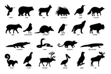Large Set Of Silhouettes Of An...