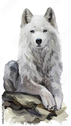 White wolf watercolor painting Wallpaper Mural