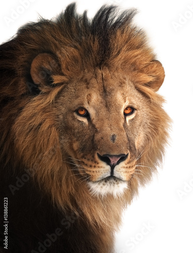 Foto op Plexiglas Leeuw Lion great king portrait isolated on white