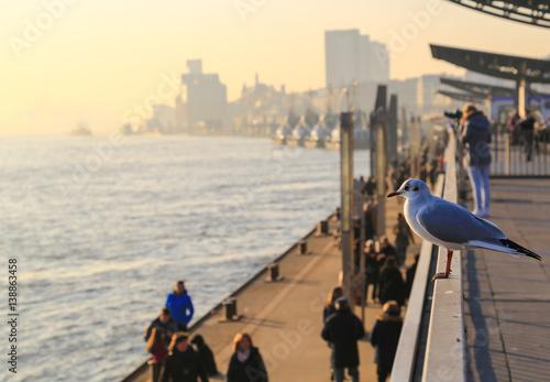 Fotografía  Maritime Scene in Evening Sun