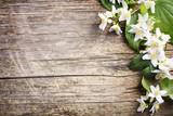 Jasmine flower on wooden background