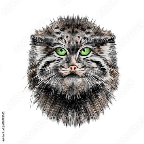 Photo sur Toile Croquis dessinés à la main des animaux Pallas'cat head sketch vector graphics color picture