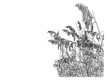 A Line Drawing Of Sea Oats On The Beach