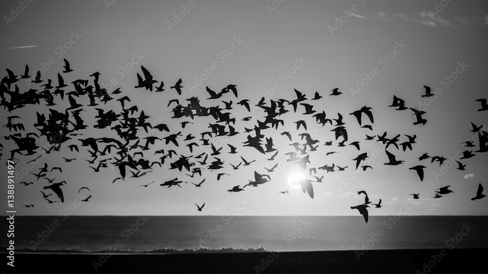 Silhouettes flock of seagulls over the Ocean. Black-and-white photo.