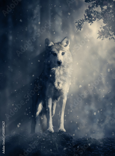 Naklejki wilk  fantasy-wolf-in-the-forest