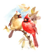 Male And Female Cardinals Sitting On The Branch Two Birds Watercolor Hand Painted Greeting Card Fall Illustration