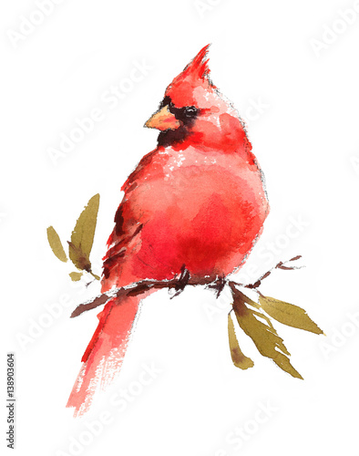 Fotografie, Tablou Watercolor Bird Red Cardinal Hand Painted Illustration isolated on white backgro
