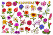Sticker collection for colorful fresh flower