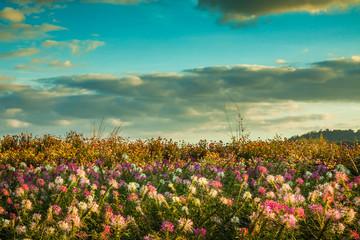 Panel Szklany Sky sunny flower garden