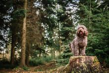 Dog Stood On Log In Forrest