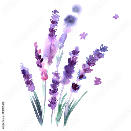 Watercolor hand painted lavender flowers on white background. Invitation. Wedding card. Birthday card. Wall mural