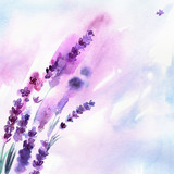 Watercolor hand painted lavender flowers on white background. Invitation. Wedding card. Birthday card. - 138935876