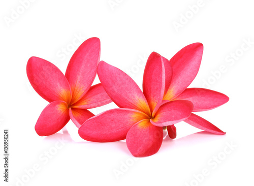 frangipani (plumeria) flowers on white background Poster Mural XXL