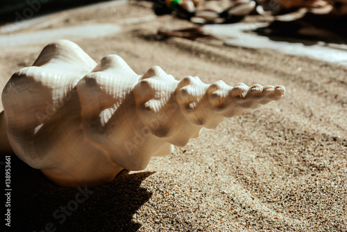 Fotomural Stella marina nella sabbia