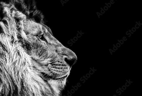Foto op Plexiglas Leeuw Portrait of a Beautiful lion, Cat in profile, lion in dark