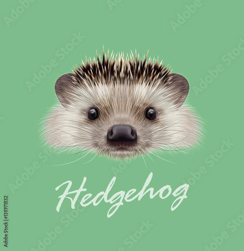 Cuadros en Lienzo Vector Illustrated portrait of Hedgehog