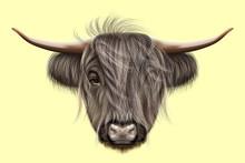 Illustrated Portrait Of Highla...