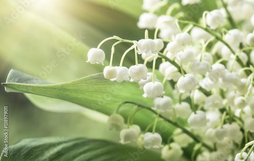 Poster Muguet de mai Flower lily of the valley, closeup, spring