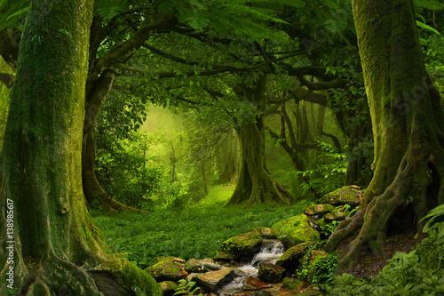 Foto op Canvas Bomen Deep tropical jungles of Southeast Asia in august
