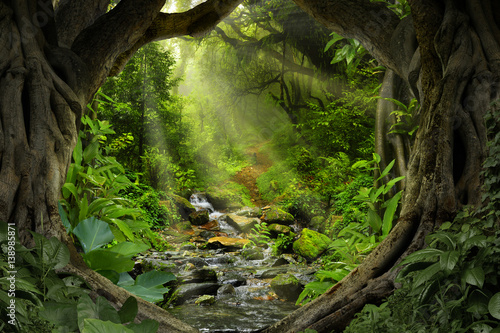 Garden Poster Road in forest Deep tropical jungles of Southeast Asia in august
