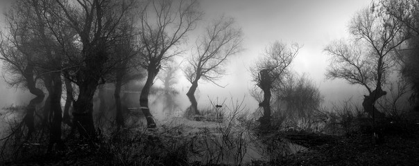 Spooky landscape showing silhouettes of trees in the swamp on misty autumn day
