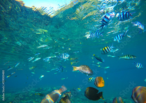 Staande foto Koraalriffen Diverse coral reef fishes in blue water of tropical lagoon. Snorkeling by exotic island.