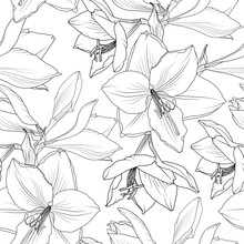 Amaryllis Hippeastrum Lilly Floral Seamless Pattern. Spring Summer Flowers Detailed Black And White Drawing Outline Sketch. Vector Design Illustration For Textile, Fabric, Decoration, Packaging.