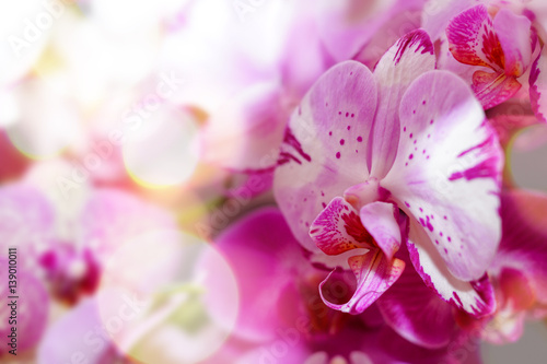 Plamista orchidea - 139010011