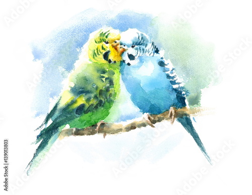 Watercolor Pet Birds Green and Blue Budgerigar Parakeets Hand Drawn Summer Tropi Fototapeta