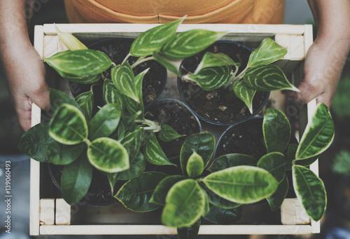 Foto auf AluDibond Pflanzen Plant Green Growth Gardening Botany Natural