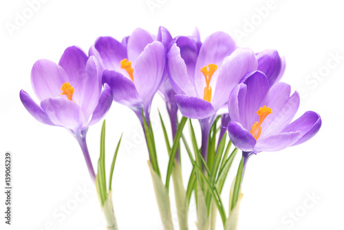 Photo sur Aluminium Crocus Spring flowers, crocus