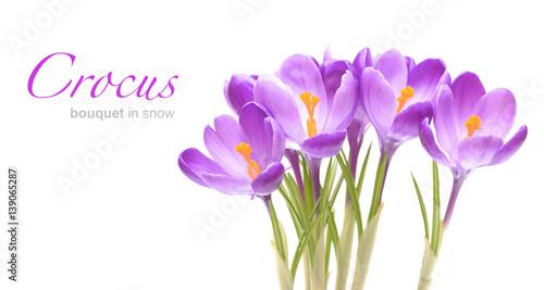 Foto op Plexiglas Krokussen Spring flowers, crocus