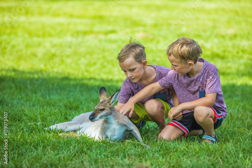Two little boys sitting on the grass and touching australian kangaroo